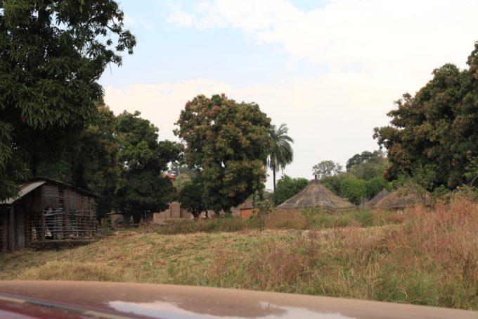 Pictured above are mango trees and huts in Kajokeji, South Sudan